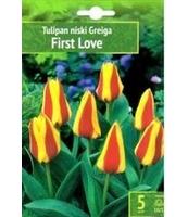 TULIPAN FIRST LOVE 5 SZT. BENEX