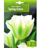 TULIPAN SPRING GREEN 5 SZT. BENEX