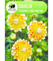 DALIA PEACHES AND CREAM 1SZT