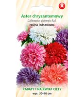 ASTER CHRYZANTEMOWY MIESZANKA