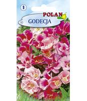 GODECJA POLAN