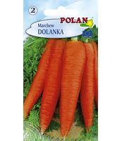 MARCHEW DOLANKA POLAN