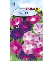 WILEC POLAN