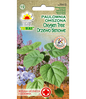 PAULOWNIA OMSZONA - OXYGEN TREE - DRZEWO TLENOWE