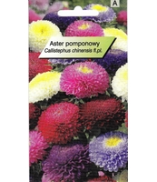 ASTER POMPONOWY TOR