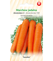 MARCHEW AMSTERDAMSKA TOR